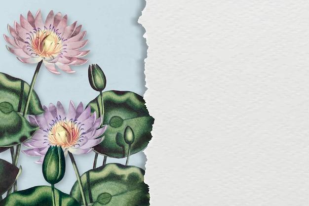 Blank purple water lilies background