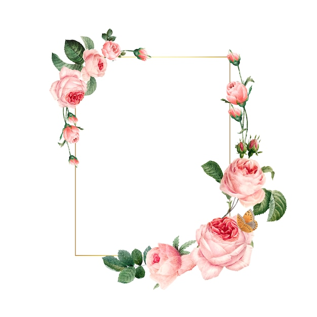 Blank rectangle pink roses frame on white background
