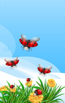 Blank scene with ladybugs in the garden with some flowers at daytime