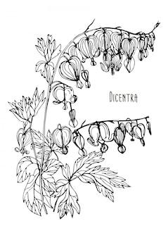 Кровоточащее сердце цветок. ручной обращается черно-белый иллюстратор