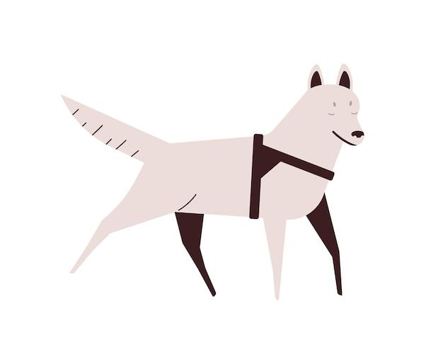눈 먼 개 평면 벡터 일러스트 레이 션. 활동적인 실행 애완 동물. 장애, 질병 개념을 가진 강아지입니다. 국내 동물 디자인 요소입니다. 흰색 배경에 격리된 순종 화이트 허스키를 걷고 있습니다.