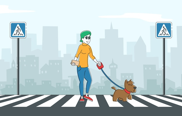 Blind woman walking with guide dog crossing street along zebra