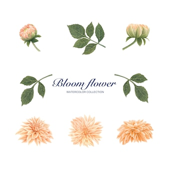 Bloom flower element watercolor on white for decorative use.