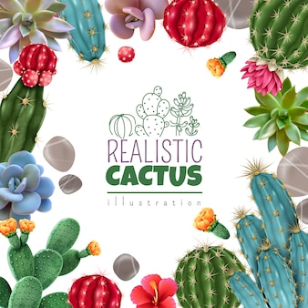 Blooming cacti and popular succulents varieties easy care decorative indoor plants realistic colorful square frame