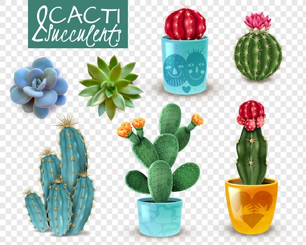 Blooming cacti and popular succulents varieties easy care decorative indoor plants realistic set transparent
