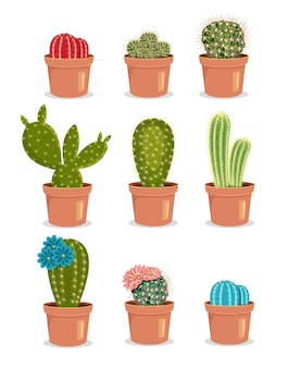 Blooming cactus cactus with flower cactus in pot colored cactus  icon illustration set