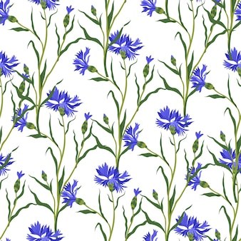 Blooming cornflowers with leaves and stems vector