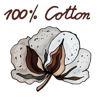 Blooming cotton on an isolated white background the contour is drawn by hand