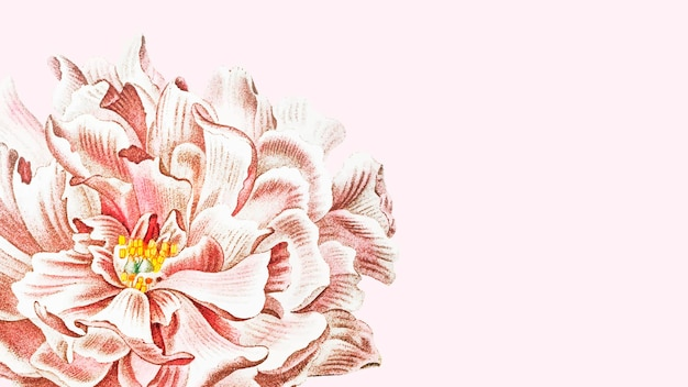 Carta da parati floreale di peonia in fiore su sfondo rosa
