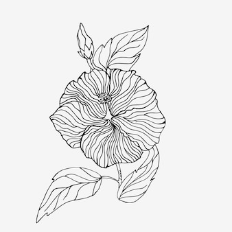Blooming hibiscus in a linear style.  isolated flower on a white background. eps10.
