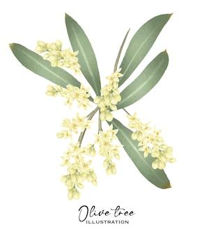 咲くオリーブの木の枝の手描きの白い背景の上の孤立したイラスト