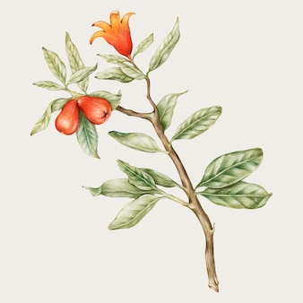 手描きの咲くオレンジ色の花のベクトル