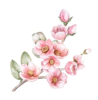 リンゴの木、アプリコットの咲くピンクの枝