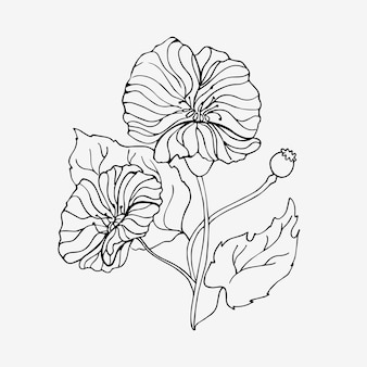 선형 스타일의 개화 양귀비. 꽃의 윤곽 그리기입니다. 흰색 배경에 고립 된 개체