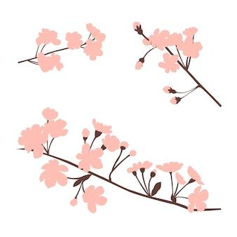 ピンクの花で隔離の咲く木