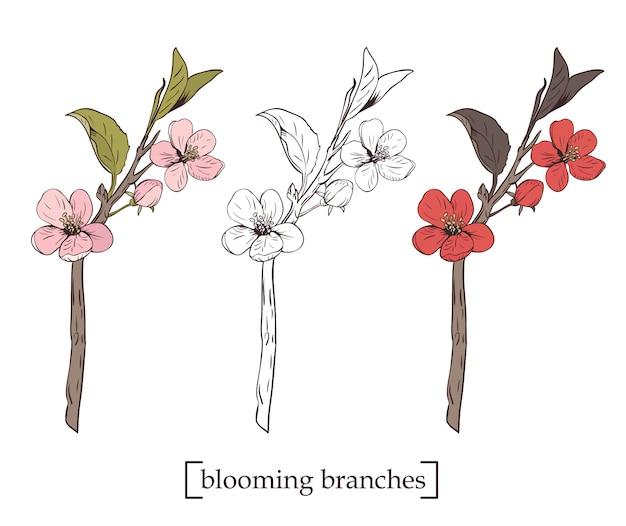 피 나무. 컬렉션을 설정하십시오. 손으로 그린 식물 꽃 가지