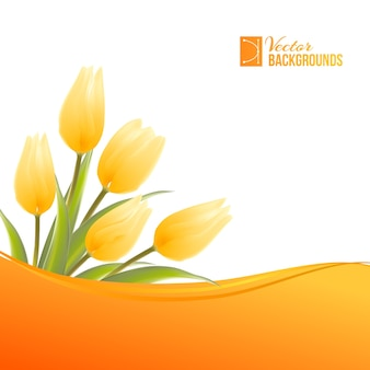 Blooming tulip on white background.