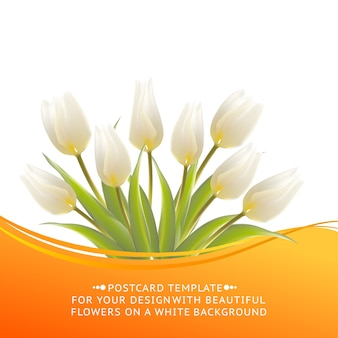 Цветущий тюльпан