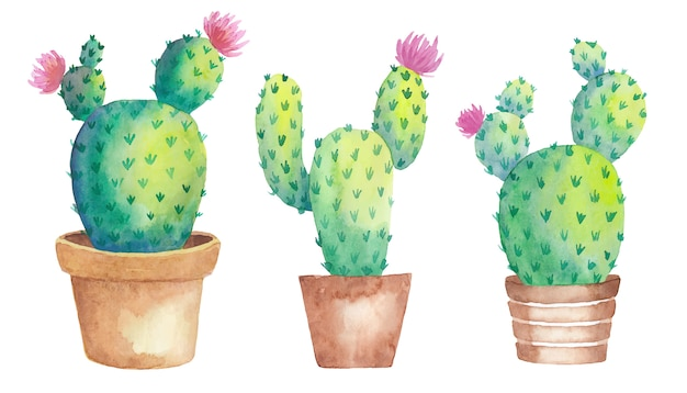 Blooming watercolor three cactus set in pots with flowers.   illustration