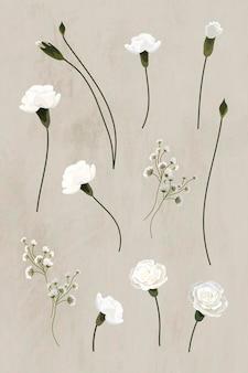 Vettore di raccolta di elementi di design di garofano bianco in fiore