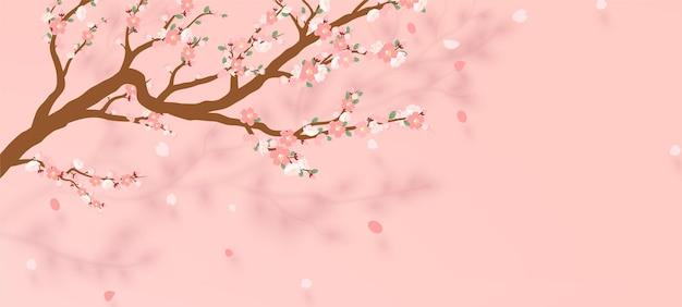 사쿠라의 꽃이 만발한 지점-떨어지는 꽃잎과 일본 벚꽃 나무.