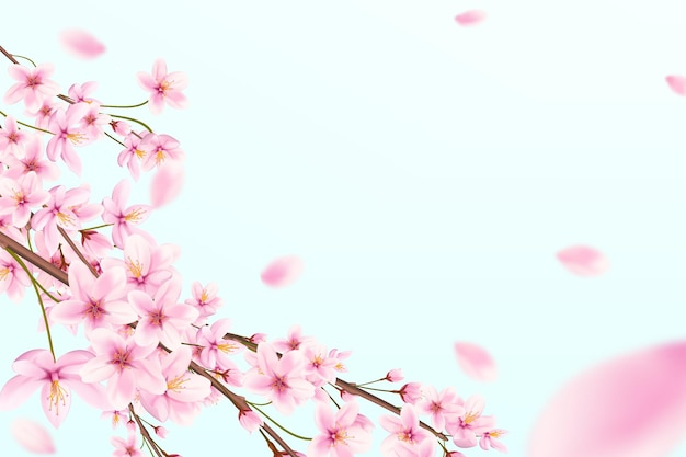 Blossoming cherry branches with flying petals on a blue background. japanese sakura.