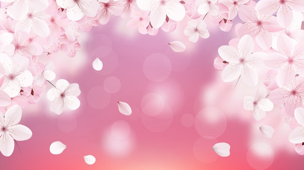 Blossoming light pink sakura flowers