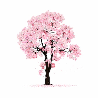 Blossoming pink sakura tree isolated