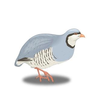 Blue bird partridge in the steppe