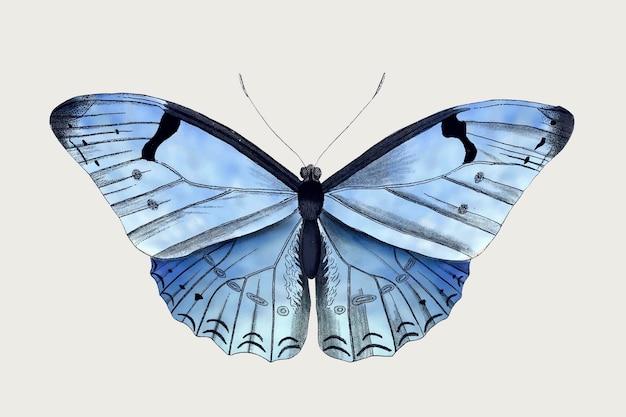 青い蝶のイラストのベクトル、ビンテージパブリックドメインの画像からリミックス