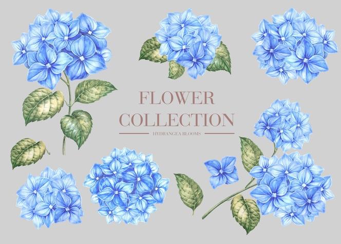 Blue hydrangea flowers set.