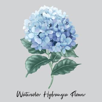 水彩風の青いアジサイまたはオルテンシア咲く花のイラスト