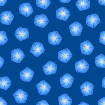 Blue morning glory flower on indigo blue background