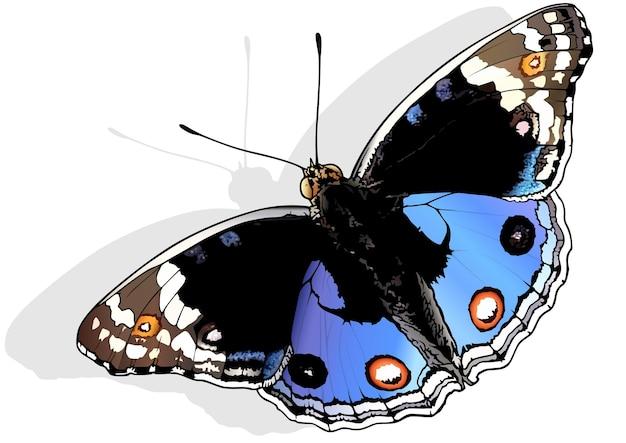 Голубые анютины глазки бабочка junonia orithya
