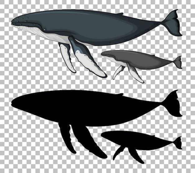투명에 실루엣이있는 푸른 고래와 아기 푸른 고래