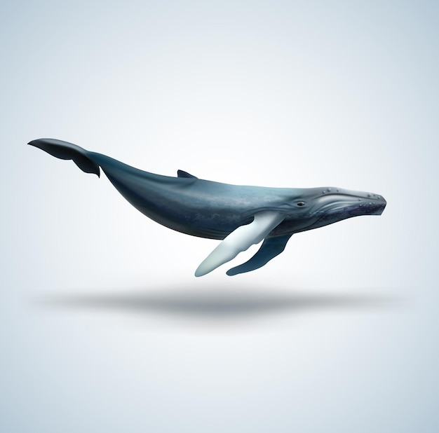 Синий кит, изолированные на белом фоне