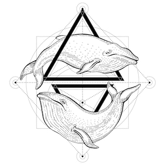 シロナガスクジラのタトゥー。三角形と海の動物の幾何学的なベクトルイラスト。流行に敏感なビンテージスタイルのロゴをスケッチします。