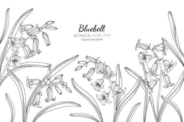Bluebell flower and leaf hand drawn botanical illustration with line art.