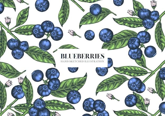 Blueberries. hand drawn illustration