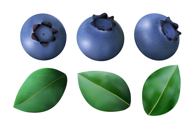 Blueberries and leaves isolated on white