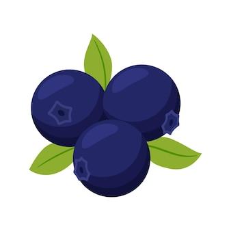 잎 블루 베리입니다. 세 가지 열매. 과일, 베리 아이콘입니다. 평면 디자인. 컬러 그림 흰색 배경에 고립입니다.