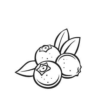 Blueberry fruit berry outline icon, drawing monochrome illustration. healthy nutrition, organic food, vegetarian product.