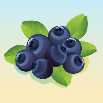 Blueberry illustration vector
