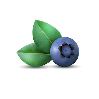 Blueberry and leaves with shadow isolated