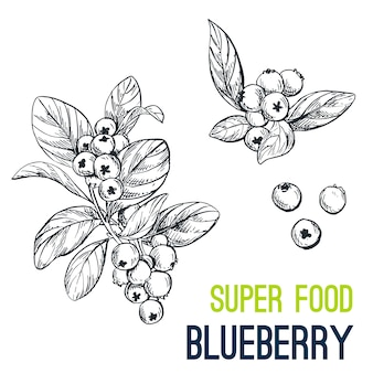 Blueberry. super food hand drawn