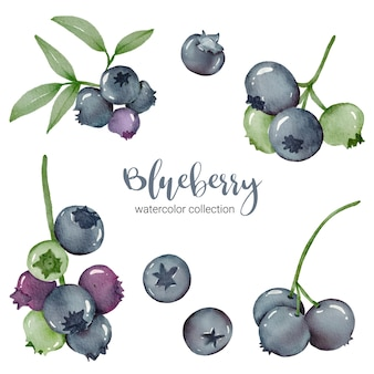 Blueberry in watercolor collection with green and leaf with branch