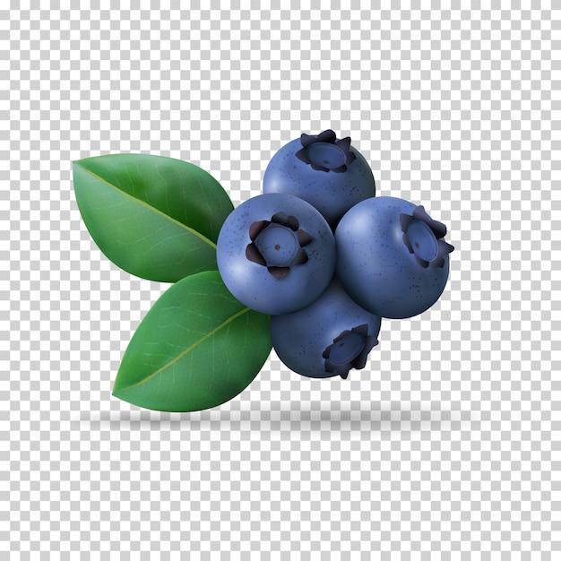 透明に分離された葉とブルーベリー