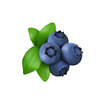 Blueberry with leaves isolated on white