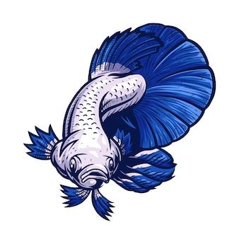 ブルーリムベタ魚