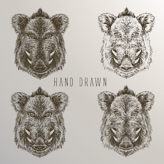 Boar's head hand drawn collection